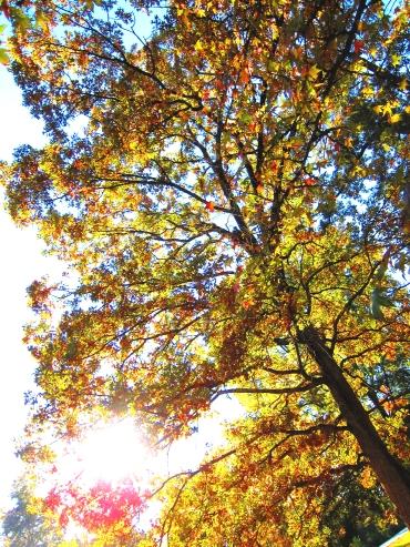 Leaf Peeping 01